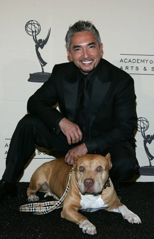 Casear Millan and his pit-bill, Daddy - Photo from mydogtraining-101.com