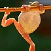screaming frog profile image