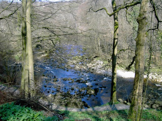 River Wharfe--D.A.L.