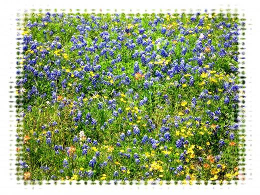 Field of blooming wildflowers