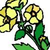 Chrysanthus profile image
