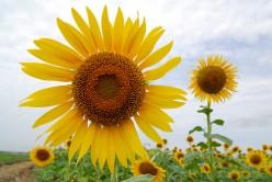 Flower Planting Tips For Beginners