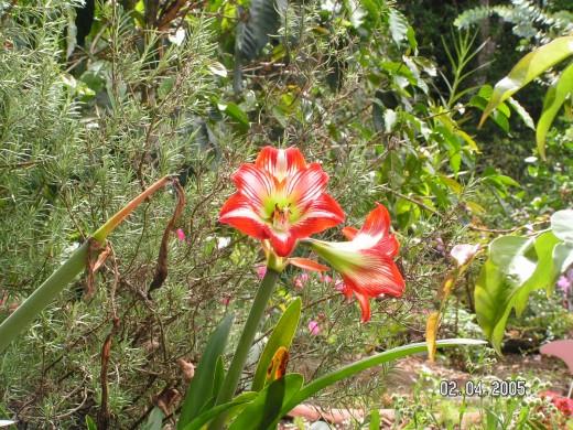 Boquete Bouquet