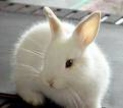 Things To Think About Before Buying A Rabbit
