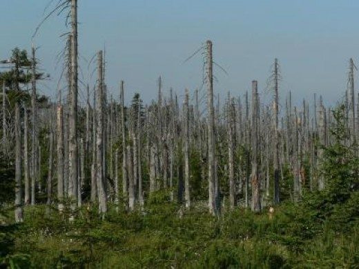 acid rain leads to the destruction of forests and whole ecosystems. What occurs here is also bad for agriculture.