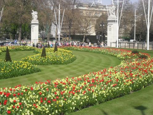 Regimental flowers