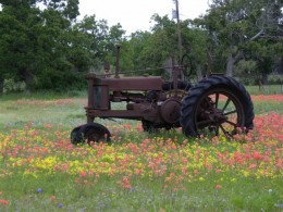 Farm tractor and Indian Paint Brushes Wild Flowers in Texas