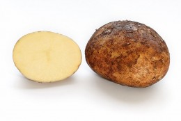 Potato and cross-section