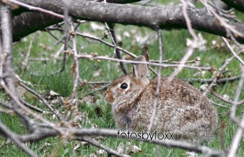 a beautiful jack rabbit visitor who checked out my property for some yummy plants