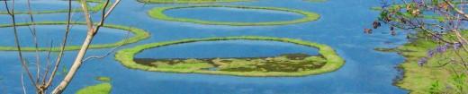 Loktak Lake - largest fresh water lake in northeastern India, Bishnupur, Manipur