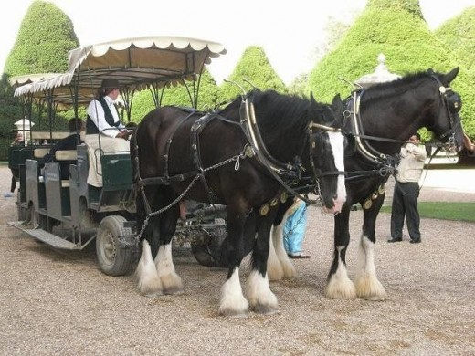 Hampton Court Horse Drawn Train