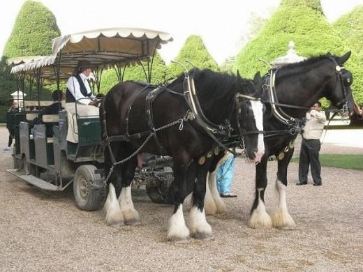 Hampton Court Horse Drawn Train
