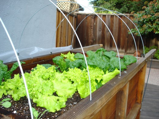 A field of greens starts with compost.