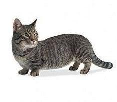 Dwarfed breed: many fear arthritis will develop in breed
