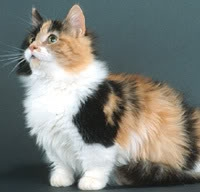 Calico look