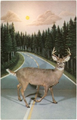 Deer Caught in the headlights