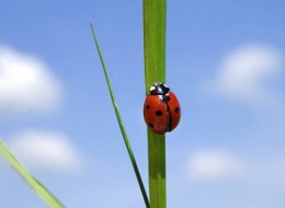 Wait till the beneficial insects are in force.