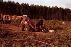 Forestry operations in kwaZulu-Natal. Photo Tony McGregor