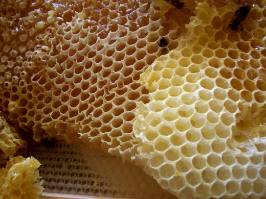 Honeycombs by merdal on wikimedia commons