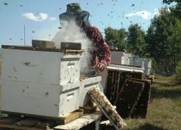 Beekeeper Public Domain