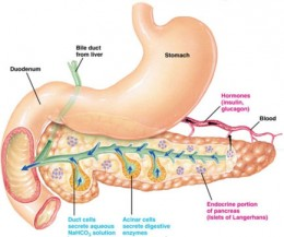 This is the natural pancreas system. A new pancreas system combined with a software is developed