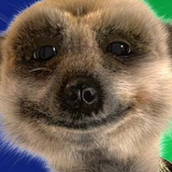 Compare the Meerkats, Advertising that becomes cult TV