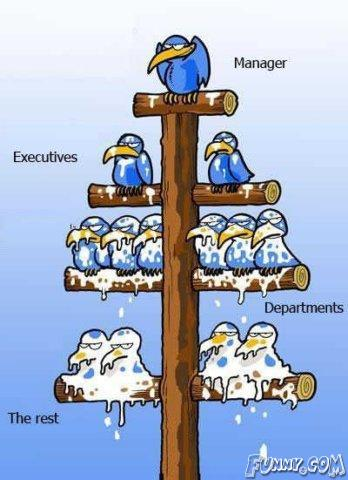 ladder of life