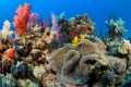 Buy Faux Coral Reef Jewelry - Save The Environment