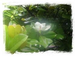 Magnolia ~ Beginning the Odyssey