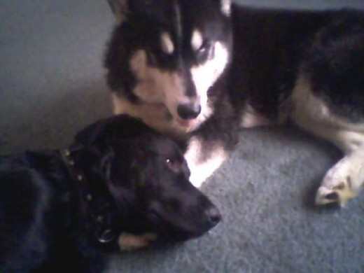 Yager and Nitro. (last picture of Nitro)