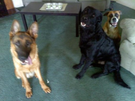 Yager, Gunner and McKenzie