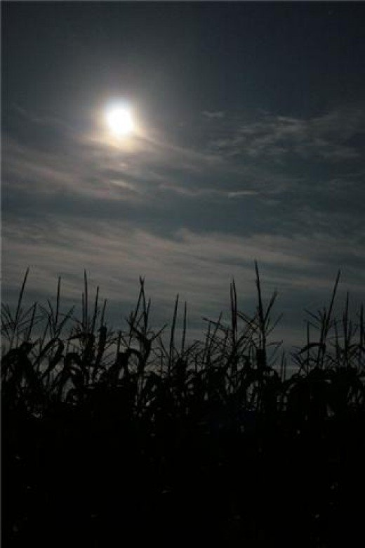 Corn moon, Sturgeon moon, Wort moon