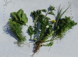 'Weeds' from my garden