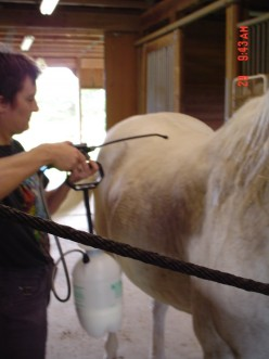 External Parasites: Bugs are Bugging My Horse
