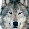 julie58 profile image