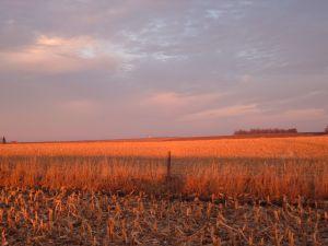 Iowa Sunrise (behanna on Sxc.hu)