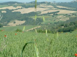 Umbria - Spring fields