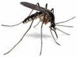 Best Mosquito Repellent Sprays - The World's Strongest Insect Repellents