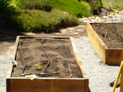 "Raised beds with their ""growing medium"" of enriched, healthy soil."