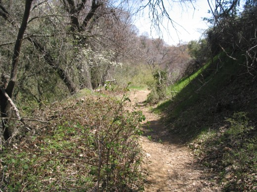 This is the hiking Trail around the Ranch.  On this spot a few years ago I encountered a Bobcat.