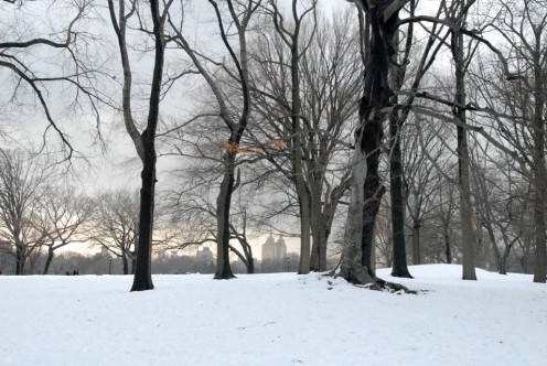 Great Lawn, Central Park