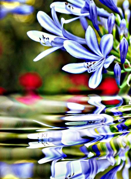 Beauty of Aromatherapy Oils