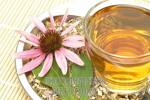 Buy echinacea tea here