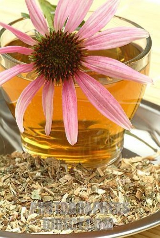 echinacea herbal tea
