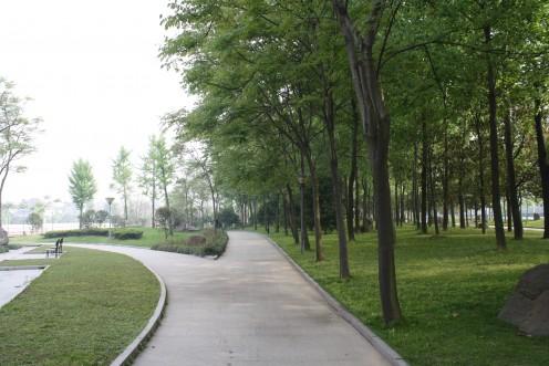 More garden greenery