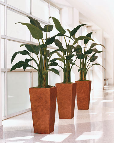 Bird of Paradise silk plants are completely non-toxic!