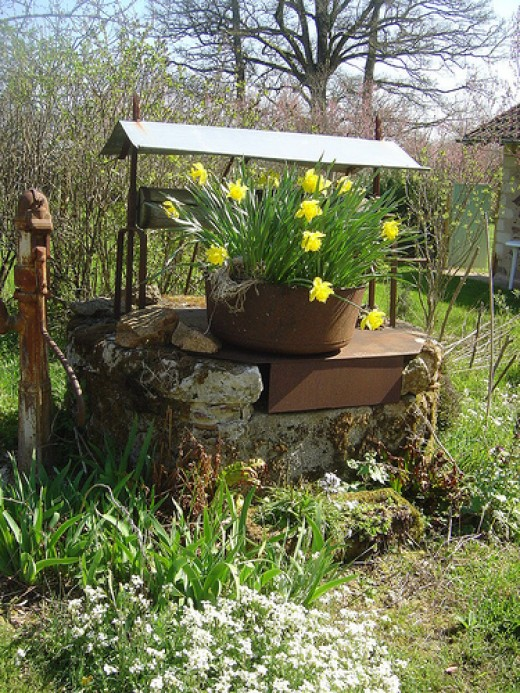 Daffodils in Spring at Les Trois Chenes. Our 'Wishing Well' came in handy when our piped water froze!
