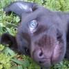 datahound profile image