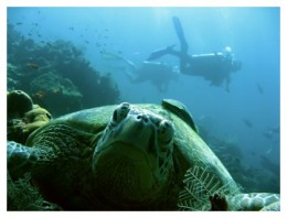Divers call it paradise at Perhentian
