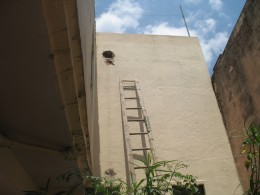 A OPENING IS MADE IN THE PARAPET WALL OF THE ROOF TO COLLECT ALL THE RAIN WATER AND BRING IT DOWN TO THE WELL.
